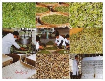 红茶生产工艺及技术参数|红茶制作