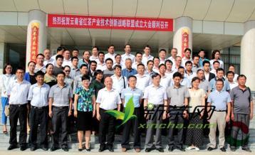 云南省红茶产业技术创新战略联盟在凤庆成立|红茶新闻