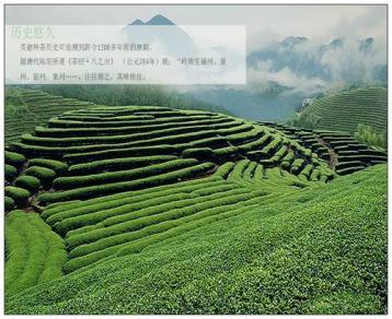 """英德红茶:广东红茶的""""文化符号"""""""