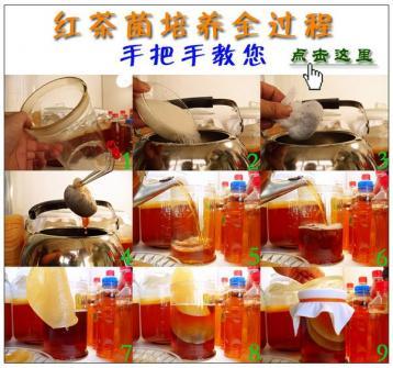 家庭如何培养红茶菌|红茶菌饮料的作用