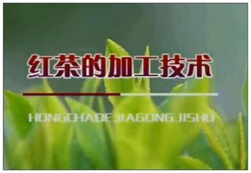 红茶加工技术视频|红茶制作工艺