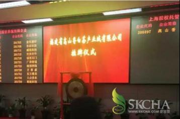 福鼎白茶企业登陆上海股权交易市场|白茶新闻