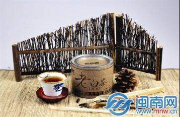 闽南茶客爱上壶煮老白茶|福鼎白茶