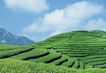 政和白茶标准样在济全国首发|白茶新闻