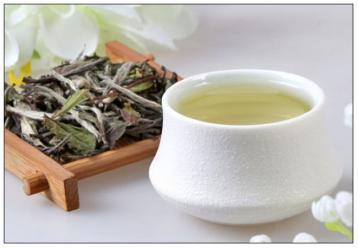谈谈白茶的功效与作用