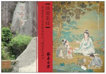 观赏白茶中的茶叶文化|白茶文化