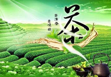 中国白茶的文化建构|白茶的历史内涵