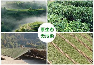 白茶知识篇|白茶文化资料