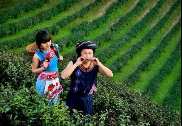 福鼎做茶歌||福鼎茶文化