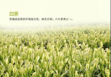 新工艺白茶的介绍|福建白茶种类