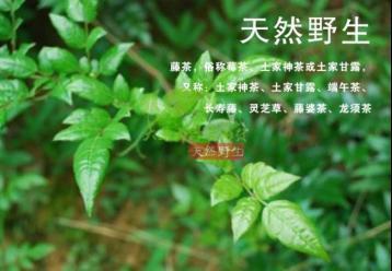 连州白茶|白茶种类