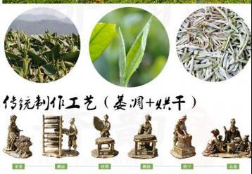 贡眉的加工工艺|白茶制作
