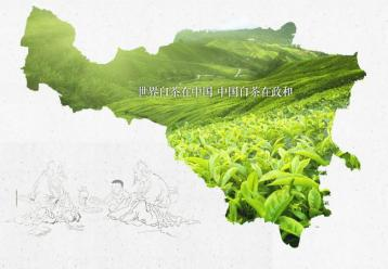 政和白茶的品质特征|白茶品种