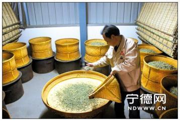 白茶烘焙技术|白茶加工