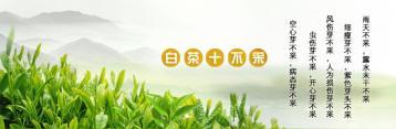 白茶采摘技术|白茶制作