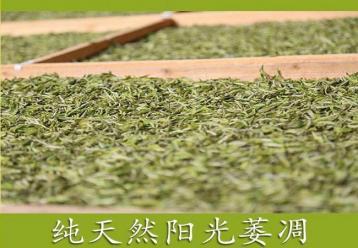 白茶萎凋技术|白茶制作工序