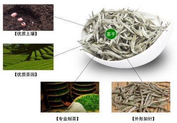 白茶(白牡丹、白毫银针)的鉴别方法|白茶选购