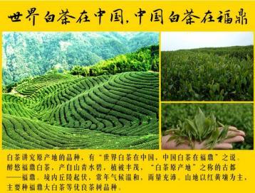 福鼎白茶有哪些品牌|白茶品牌