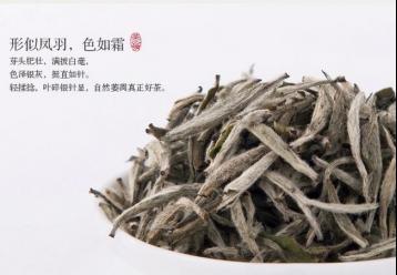白毛茶审评 白茶审评技术