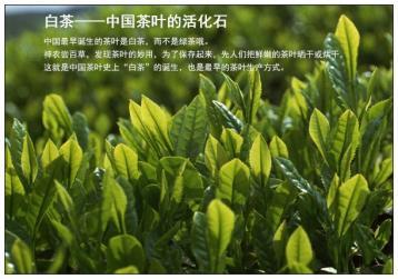 解析白茶的功效与作用:三抗三降