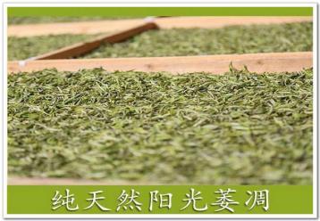白茶图片:萎凋图片|福鼎白茶制作工艺
