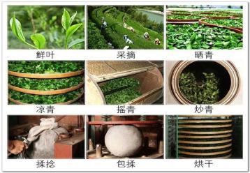 白茶制作工艺流程图|白茶加工图片