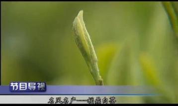 福鼎白茶 海峡卫视 《海峡名录》|白茶视频