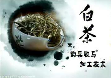 白茶的采收与加工技术|白茶制作工艺视频
