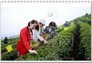 无公害茶叶的防虫技术 |茶叶防虫技术