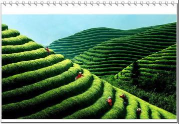 2012年评选的中国十大名茶及产地