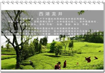 中国十大名茶之西湖龙井简介