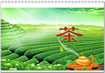 乌龙茶的种类|乌龙茶百科