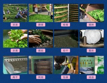 福建乌龙茶加工工艺流程|乌龙茶制作