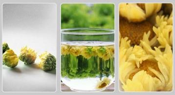 菊花茶种类不同 功效大不同|花茶知识