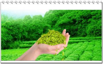 从食品安全看古代绿茶评级|绿茶品鉴