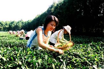 """青川县推进名优绿茶产业快速发展的""""四化""""措施"""