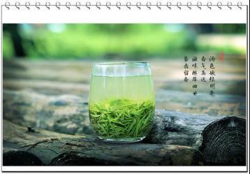 绿茶介绍及其特性|绿茶基础知识