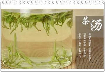 什么样的绿茶最好|绿茶知识