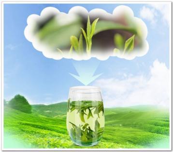 绿茶的产地有哪些?|绿茶知识