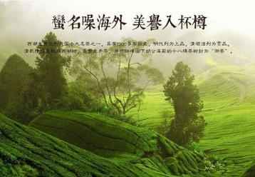 西湖龙井茶的历史|绿茶文化