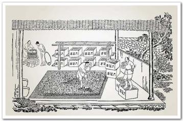 晒干收藏|中国绿茶的历史(三)