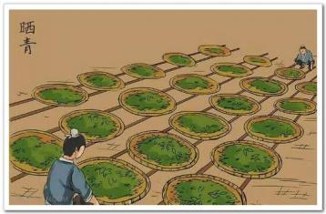 原始晒青、炒青、烘青、蒸青|中国绿茶的历史(四)