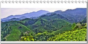 四川绿茶的种类|四川绿茶有哪些?
