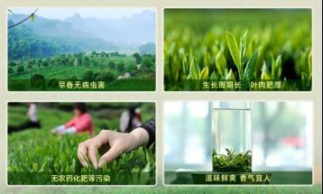 江西绿茶历史名茶大全|江西绿茶有哪些