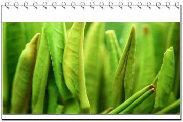 中国绿茶主要品种介绍|绿茶种类