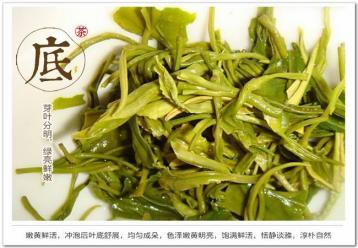 黄山毛峰茶叶图片展示|绿茶图片素材