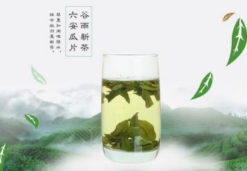 六安瓜片图片|绿茶茶叶图片