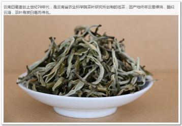 云南白毫茶叶图片展示|绿茶图片