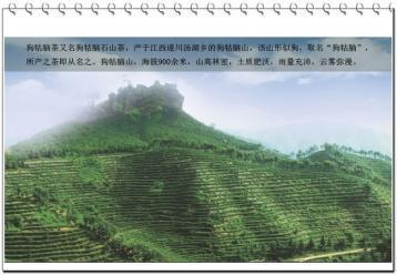 绿茶狗牯脑茶园生态图片|绿茶图
