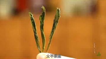 《徽茶》系列纪录片之太平猴魁|绿茶视频